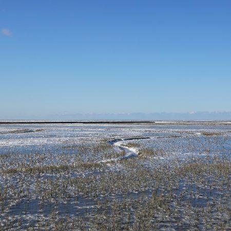 Bevroren Waddenzee (kwelder Noordpolder)