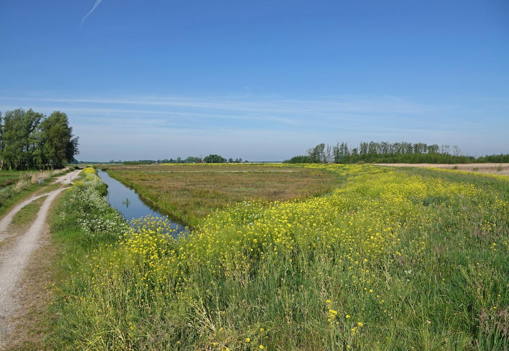 Matslootgebied (Onlanden) in het voorjaar