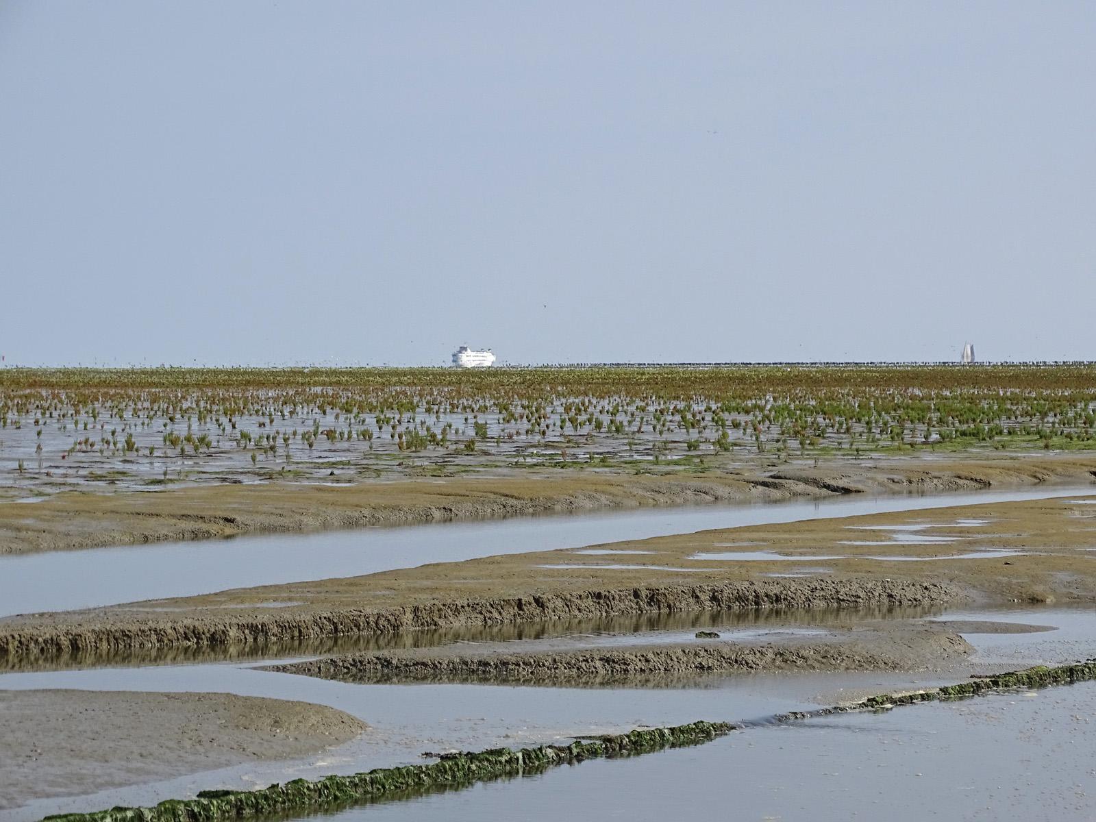Peazemerlannen (eind zomer)