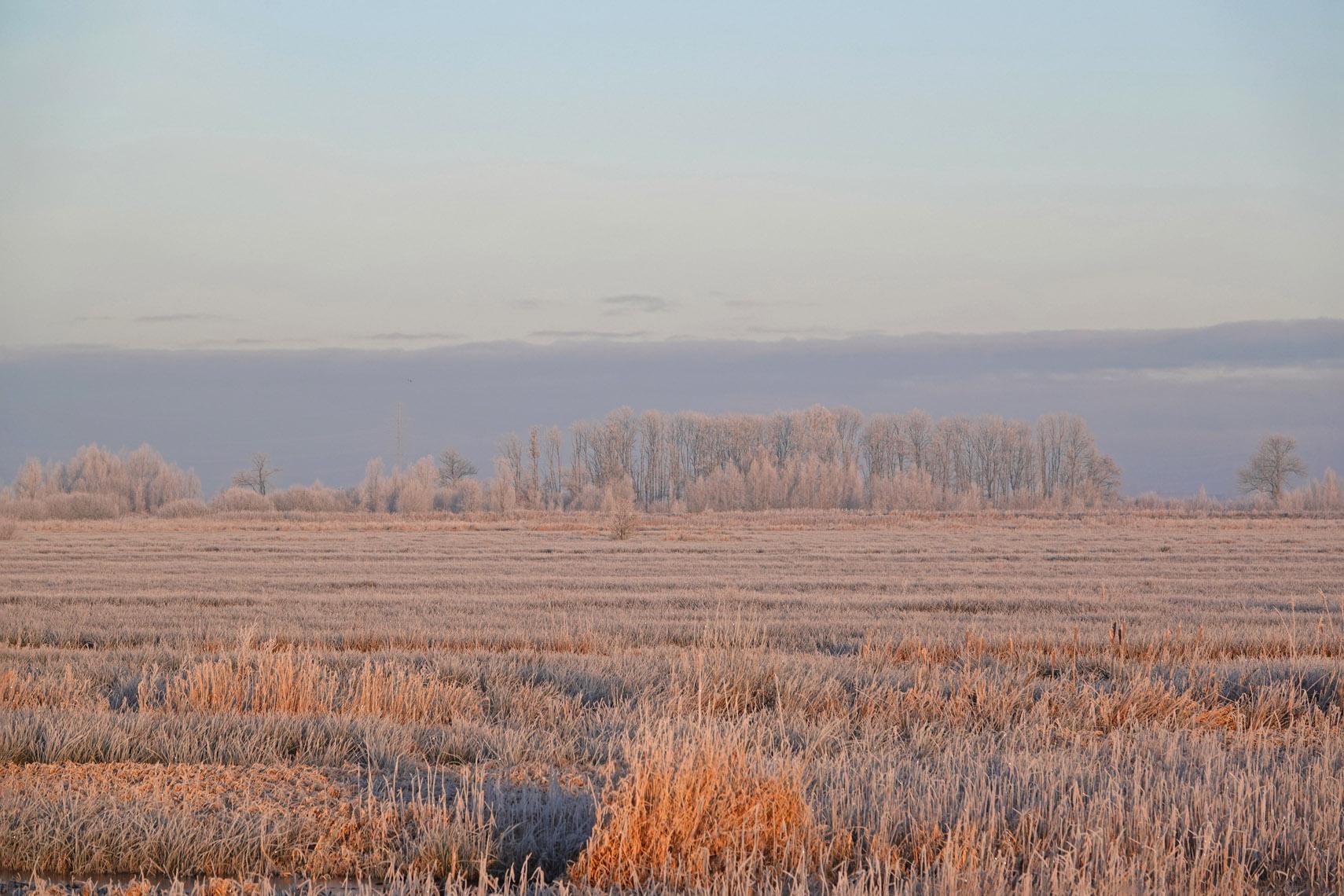 Peizerweering in de Onlanden (winter)