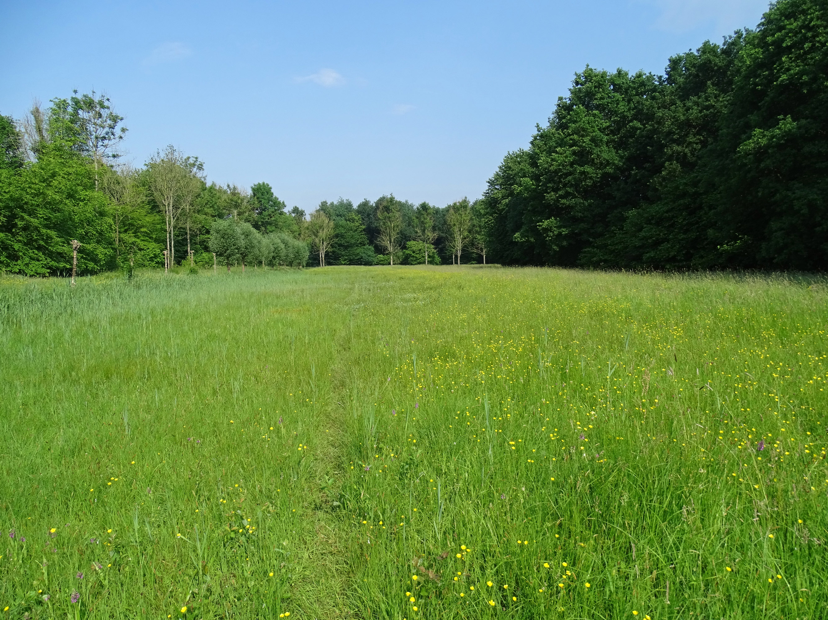 Westerveldse bos